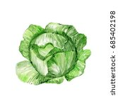 watercolor cabbage. hand drawn... | Shutterstock . vector #685402198
