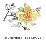 watercolor hand drawn flower on ... | Shutterstock . vector #685439728