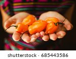 mexican hands and habanero chile | Shutterstock . vector #685443586