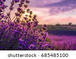 close up of blooming lavender... | Shutterstock . vector #685485100