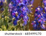 Blue Purple Flowers Of The...