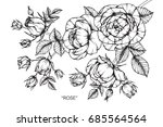 rose flowers by hand drawing... | Shutterstock .eps vector #685564564