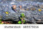 snail crawling on a hard rock... | Shutterstock . vector #685575016