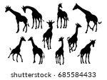 A High Quality Giraffe Animal...