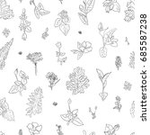 herbs flower graphic seamless... | Shutterstock .eps vector #685587238