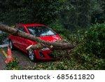 Car Under Fallen Tree.