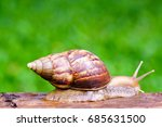 snail crawling on old wood.  | Shutterstock . vector #685631500