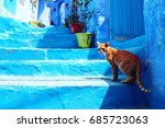 A Cat In Blue City Of Chechen ...