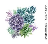 succulents painted with... | Shutterstock . vector #685745344