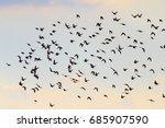 silhouettes of birds flying in... | Shutterstock . vector #685907590