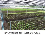 growing vegetables without...   Shutterstock . vector #685997218