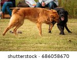 dogs playing | Shutterstock . vector #686058670