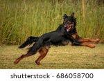 beautiful dog | Shutterstock . vector #686058700