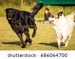 dogs playing | Shutterstock . vector #686064700