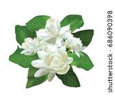 jasmine flower   Shutterstock .eps vector #686090398