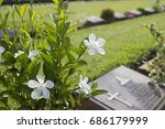 White Flowers With Gravestone...
