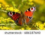 Stock photo peacock butterfly on yellow flower 686187640