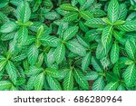 green leaf background  | Shutterstock . vector #686280964