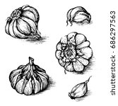 hand drawn set of garlic with... | Shutterstock . vector #686297563