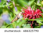 hummingbird eating red flowers | Shutterstock . vector #686325790