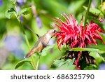hummingbird eating red flowers | Shutterstock . vector #686325790