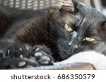 cat laying on a chair | Shutterstock . vector #686350579