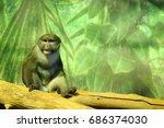 Allen Swamp Monkey Sitting On ...