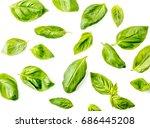 basil leaves on white...   Shutterstock . vector #686445208