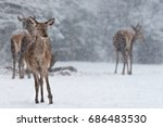 winter wildlife landscape with... | Shutterstock . vector #686483530