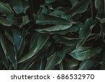 Green Leaves. Low Key Modern...