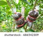 Plant Propagation   Lime...