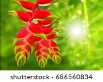 heliconia rostrata also known... | Shutterstock . vector #686560834