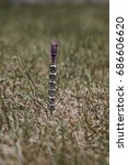 Small photo of Adrian inscription on the needle in green grass background. Silver letters.