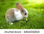 Stock photo a rabbit eating carrot on the green grass 686606860