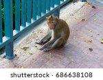 monkey | Shutterstock . vector #686638108