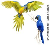 sky bird parrot in a wildlife... | Shutterstock . vector #686672806