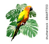 sun conure parrot with green... | Shutterstock .eps vector #686697553