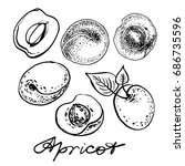apricot set. graphic hand drawn ... | Shutterstock .eps vector #686735596