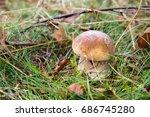 red capped forest mushroom... | Shutterstock . vector #686745280