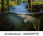underwater pike. | Shutterstock . vector #686809978
