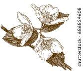 vector antique engraving... | Shutterstock .eps vector #686834608