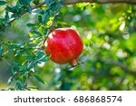 red pomegranate with green... | Shutterstock . vector #686868574