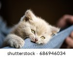 Stock photo cute little kitten focus on the nose 686946034