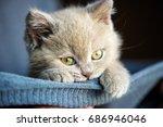 Stock photo cute little kitten 686946046
