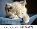 Stock photo cute little kitten 686946274