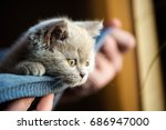Stock photo cute little kitten 686947000