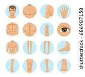 vector human. different parts...   Shutterstock .eps vector #686987158