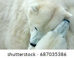two polar bears fighting on... | Shutterstock . vector #687035386