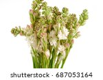 Bunch Of Tuberose Flowers And...