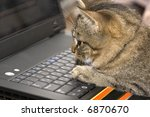 Stock photo the small kitten sits on the keyboard of a personal computer 6870670
